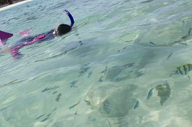 picture of sergeant major  - Asian girl looks at fish with Sergeant Major fish in foreground while snorkeling in clear sea water - JPG