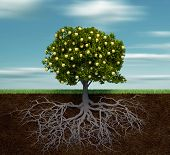 stock photo of apple tree  - Tree with golden apple  - JPG