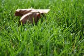 Grass and Leaf