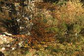 Riot Of Autumn Color