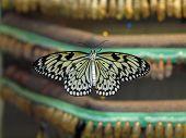 Butterfly Hatchery
