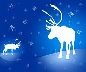 stock photo of caribou  - Christmas design - JPG