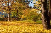 Autumn In A Ukrainian Town