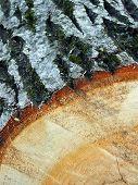 Detalhe de madeira de carvalho 1