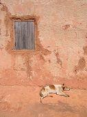 Cão dormindo ao longo de uma parede de casa,
