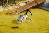 Wet Bird In The Pond