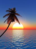 picture of beach sunset  - Top of palm trees on a background of a sunset sky - JPG