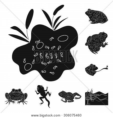 poster of Vector Design Of Fauna And Reptile Icon. Collection Of Fauna And Anuran Vector Icon For Stock.