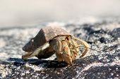 Crayfish, Galapagos