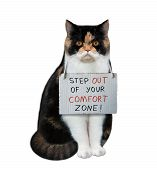 There Is A Cat With A Sign Around His Neck - Step Out Of Your Comfort Zone. It Begins A New Life. Wh poster