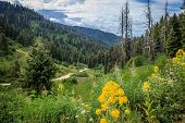 Flowers Grow In The Forest Along National Forest Road 555 In The Boise National Forest, Idaho, Usa poster
