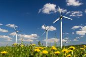 picture of wind-farm  - Wind Farm against blue sky with white clouds and yellow flowers on the ground - JPG
