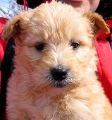 Beautiful, Small Puppy