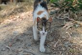 Portrait Of A Multi Colored Stray Cat With Green Eyes Walking On The Ground poster