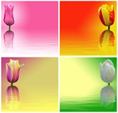 Red, Yellow, White And Pink Tulips On A Colored Background. Abstract Image Flowers With Reflection O