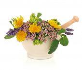Kruid lavendel, Valeriaan, dames mantel en paardebloem bloem kop met aloe vera, salie en citroen bal