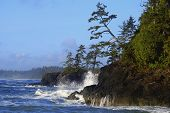 foto of pacific rim  - Waves crushing on Pacific Rim seashore on Vancouver Island - JPG