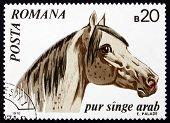 Postage stamp Romania 1970 Arabian Thoroughbred, Horse