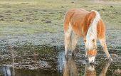 Cavalo em pé em uma piscina depois de dias de chuva