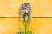 Red Indian s head sculpture on yellow wall