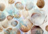 Sea shells on grunge background