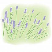 Watercolor Lavender Field