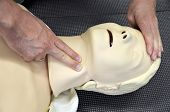 First aid medical practice mannequin or dummy Check pulse on neck