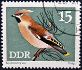 stamp printed in Germany dedicated to birds shows bohemian waxwing (bombycilla garrulus)