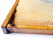 Fresh Honey In Comb.