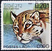 LAOS - CIRCA 1981: Um selo impresso em shows de Laos um viverrinus de Felis circa 1981