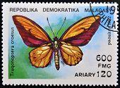 A stamp printed in Madagascas dedicated to butterfly shows troqonoptera croesus circa 1992