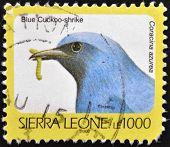 SIERRA LEONE - CIRCA 2002: A stamp printed in sierra Leone shows blue cuckoo-shrike coracina azurea