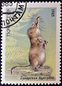 a stamp printed in USSR shows a Pamir shrew (Sorex bucharensis) from the endangered wildlife