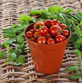 Growing Tomatoes?
