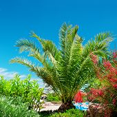 pic of swales  - Tropical palm trees in a beautiful park - JPG