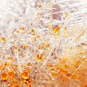 Macro Shot Of Caramel Candy-foss With Orange Sugar Drops