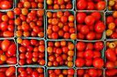 organic tomatoes in farmer's market - top view
