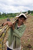 Sugar Cane Field Worker