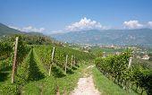 Eppan,South Tyrol,Trentino,Italy