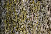 pic of woodgrain  - bark on a tree in winter - JPG