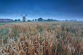 Windmill On Wheat Field In Dusk