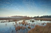 Gold Autumn Sunrise Over Swamp