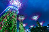 Futuristic view of amazing illumination at Garden by the Bay in Singapore