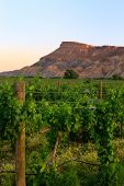 The Vineyards and Mt Garfield of palisade
