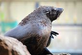 Sea lion at outdoor