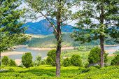 beautiful landscape the mountain and  river in India Kerala