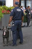 NYPD transit bureau K-9 police officer and Belgian Shepherd K-9 Wyatt providing security at US Open