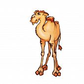 Vector illustration of camel in cartoon style