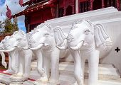White Elephant Heads In Chiang Mai Royal Park.