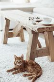 Still life details, cup of coffee on rustic bench and a cat lying down near it on white carpet